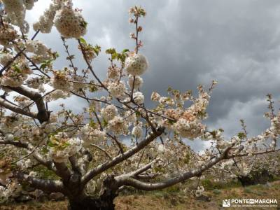 Cerezos flor_Valle del Jerte;altube cervera de buitrago rio jarama sierra cantabria